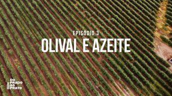 Olival e Azeite